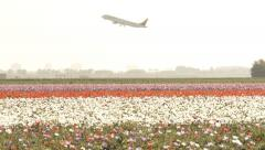 4K Dutch Flower field with airplane takeoff Stock Footage
