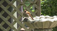 Birdbath Stock Footage