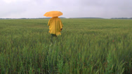 Stock Video Footage of Lonely person under an umbrella walking away through the wheat field