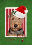 Christmas Welsh Terrier Stock Illustration