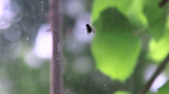 Fat green fly crawling on the dirty window pane Stock Footage