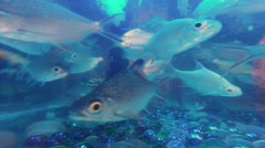 Underwater Freshwater Aquarium Stock Footage