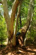 Woman on tree limb Stock Photos