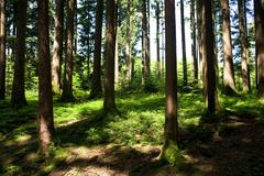 hale forest - stock photo