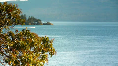Arbutus Tree with Boat in Distance Stock Footage