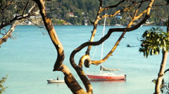 Waterfront, Arbutus Tree, Sailboat, Row Boat - stock footage