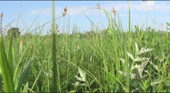 meadow,  wagtail - stock footage