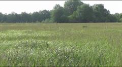 Meadow,  skylark Stock Footage