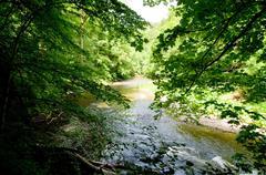 calm river - stock photo
