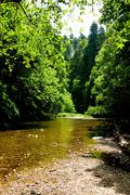 Black Forest river - stock photo