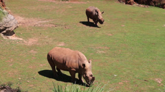 Rhinoceros in the wild. Kenya,Africa - stock footage