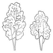 Trees deciduous, outline - stock illustration