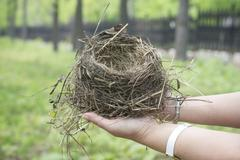 empty bird's nest closeup - stock photo