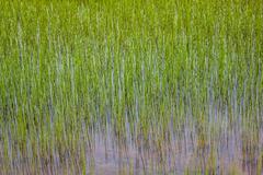 scandinavian landscape with field - stock photo
