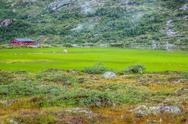 Stock Photo of scandinavian landscape with field
