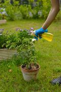 Pesticide spray Stock Photos