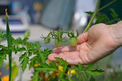 home made organic veggies - stock photo