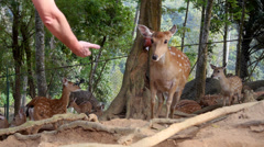 Stock video footage wildlife trust feed the deer with hands Stock Footage