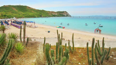 cacti and beach - stock footage