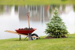 Planting an ornamental evergreen cypress Stock Photos