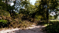 Uprooted Trees after Heavy Storm in Germany, Düsseldorf Stock Footage