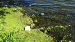 Environmental pollution garbage in the lake - stock footage