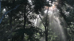 Sunlight Pierces the Forest Stock Footage
