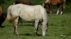 White horse Stock Footage