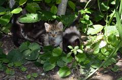 Stock Photo of Kittens hiding under a tree