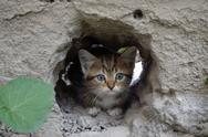 Wee  gray tabby kitten hiding in the hole walls Stock Photos