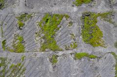 Stock Photo of Old wall of gray of tuff overgrown with green moss
