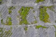 Old wall of gray of tuff overgrown with green moss Stock Photos