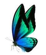Beautiful butterfly isolated on white Stock Photos