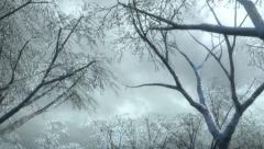 Winter forest and falling snow HD Stock Footage