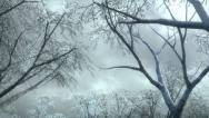 Stock Video Footage of winter forest and falling snow HD