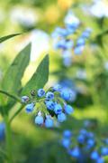 Stock Photo of blue wildflower