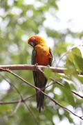 parakeet or parrot is sleeping on tree branch. - stock photo