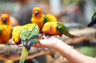 Stock Photo of many of parrot is eating foods.