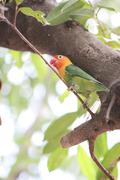 Parakeet or parrot on tree branch. Stock Photos