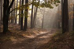 beautiful autumn lane in the forest. autumn landscape. composition of nature. - stock photo