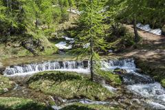 River in the forest of devero alp Stock Photos