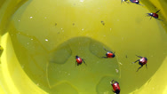 Stock Video Footage of Many bugs in the water