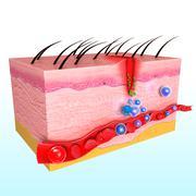 3d immune response system in human skin Stock Illustration