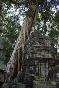 Amazing tree roots system on a temple in Angkor Stock Photos