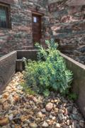 stony planter - stock photo