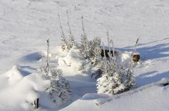 Little firs with ice and lot of snow Stock Photos