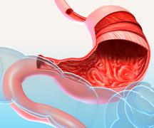 3d Anatomy of human stomach in cut section with full name Stock Illustration