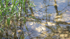 MREZ 16  Edge of a lake pond, reeds, plants, waves, detail 3 Stock Footage