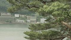 Lake Kawaguchi side pine tree 02, non color grade Full HD (1920x1080) Stock Footage