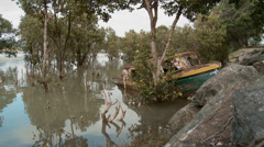 Old boat in mangroves Stock Footage
